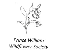 Prince-William-Wildflower