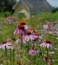 meadows_house-screening